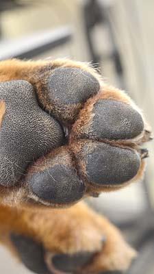 1-4 hond Dierenklinieken De Polder en Maassluis