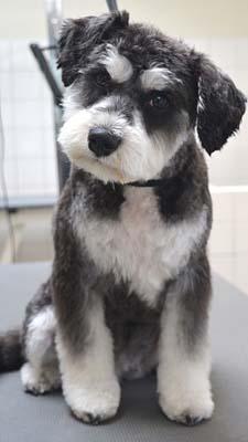 1- hond Dierenklinieken De Polder en Maassluis3
