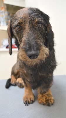 2-3 hond Dierenklinieken De Polder en Maassluis