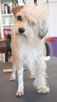 3-13 hond Dierenklinieken De Polder en Maassluis