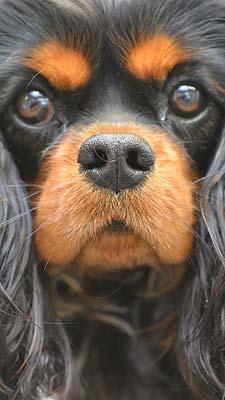 4-4 hond Dierenklinieken De Polder en Maassluis