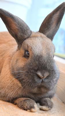 4-8 konijn Dierenklinieken De Polder en Maassluis