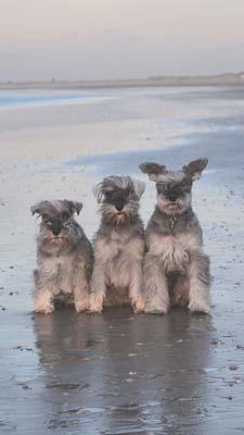 5-14 hond Dierenklinieken De Polder en Maassluis