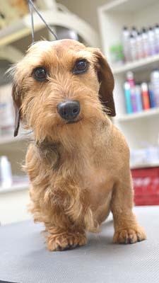 hond Dierenklinieken De Polder en Maassluis